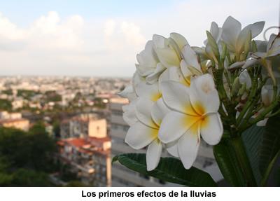 flores_en_mi_terraza