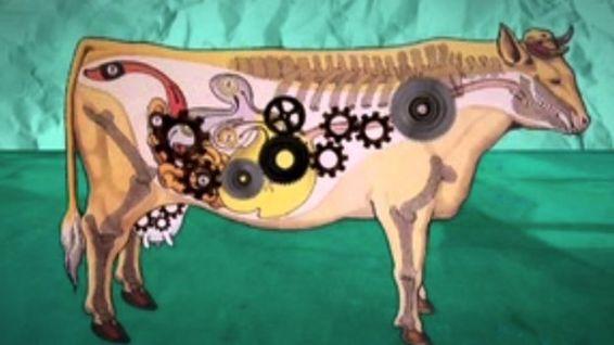 vaca-Ubre_Blanca_CYMIMA20140801_0003_13