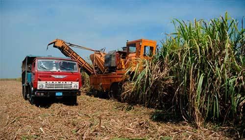Zafra-azucarera-cubana-2015-16-incumple-plan-y-decrece-respecto-a-la-anterior