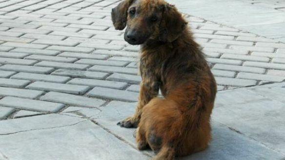 autoridades-proyecto-proteccion-animales-Barry_CYMIMA20191217_0003_13